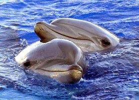 14 delfini